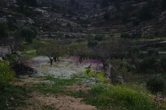 Jezzine, Λίβανος: Orchard en route to niha