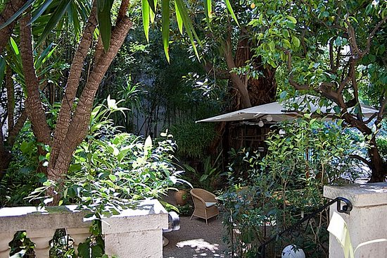 Hotel Windsor Nice : Jungle in Nice Center / Jardin tropical 