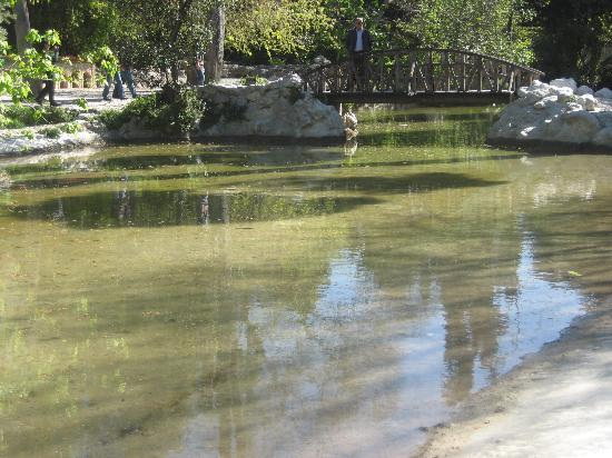 Duck pond picture of athens attica tripadvisor for Duck pond filtration