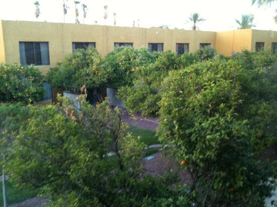 Doubletree by Hilton Tucson - Reid Park: Fruit tree view from my room