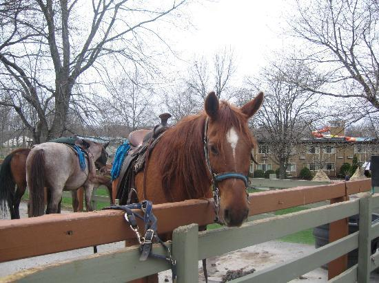 Rocking Horse Ranch Resort: the horses are cute