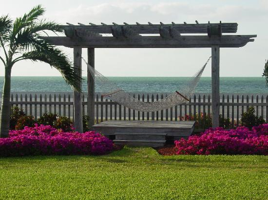 Hyatt Windward Pointe: Hammock to kick back and relax