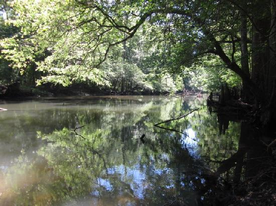 Florida Caverns State Park: The Chipola River