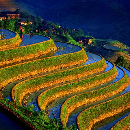 Longsheng County, : Reisterassen