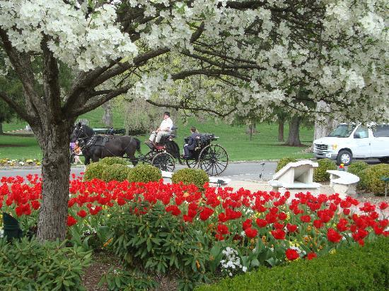 White Sulphur Springs, Wirginia Zachodnia: Carriage Rides