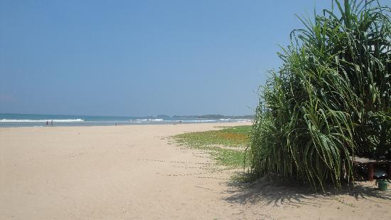 Bentota Beach Hotel: Clean Broad Beach outside of hotel