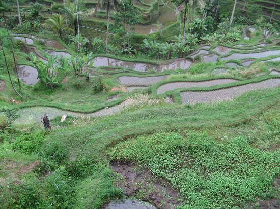 Tegalalang rice terrace ubud indonesia address for Terrace address