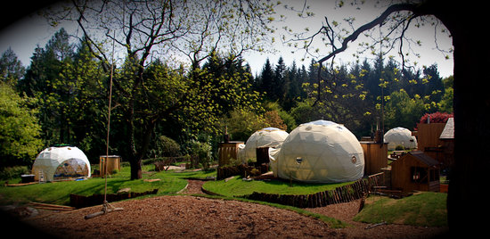Backyard Forest Management : Dome Garden (Forest of Dean, Gloucestershire  Coleford)  Campground