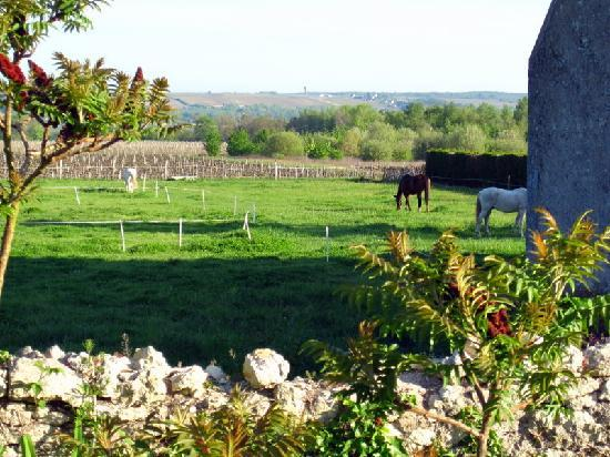 La Rongere: View of field with horses from outside room 4
