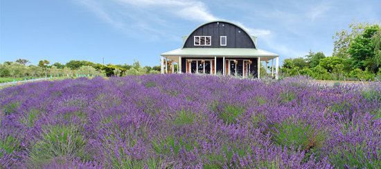 Coatesville Lavender Hill Luxury Bed & Breakfast: Lavender Hill Luxury B & B