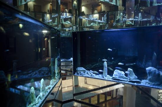 Coppid Beech Hotel: 4 Storey Aquarium