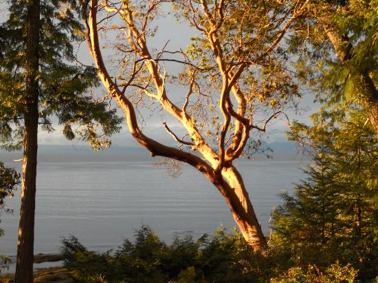 Pilot Bay Guest House: Setting sun on the arbutus.