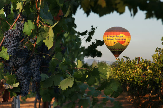 A Grape Escape Balloon Adventure