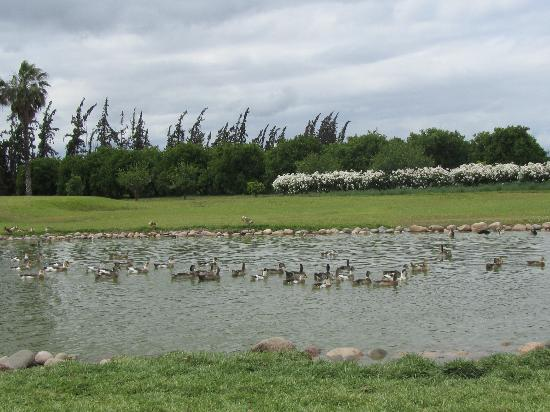 La Gazelle d'Or: The duck pond