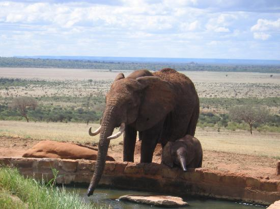 Bamburi, Κένυα: Mother and Baby at VOI water hole