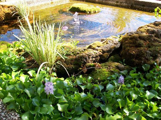 Oberlin Inn: Relax by the water feature