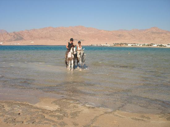 Things to do in Dahab - horseback riding