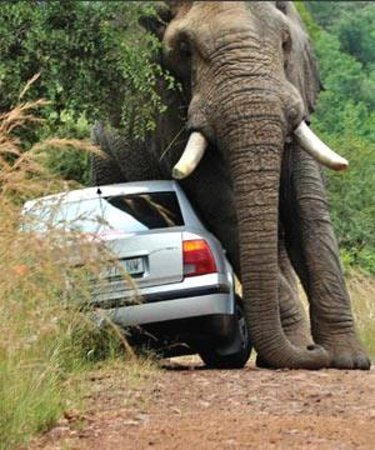Nelspruit, Sydafrika: Do Not go close to Elephants