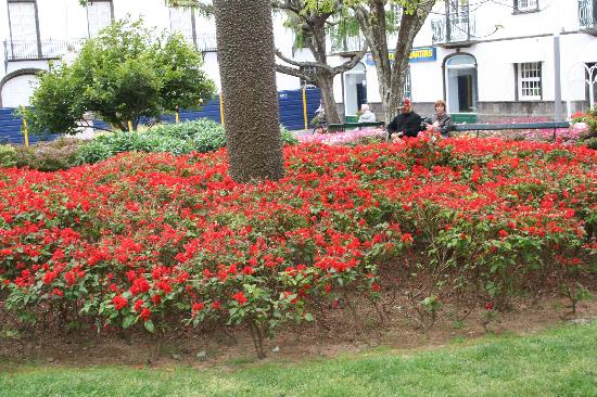 Ponta Delgada, Portugal : beautiful flowers and plants