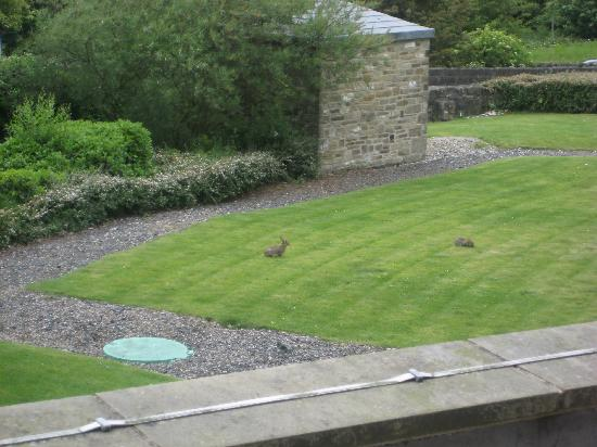 View Of Rabbits In The Gardens From Our Room Picture Of