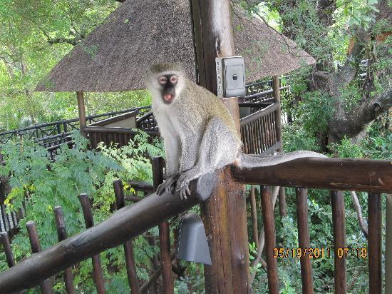 Protea Hotel Kruger Gate: Monkey on the observation deck