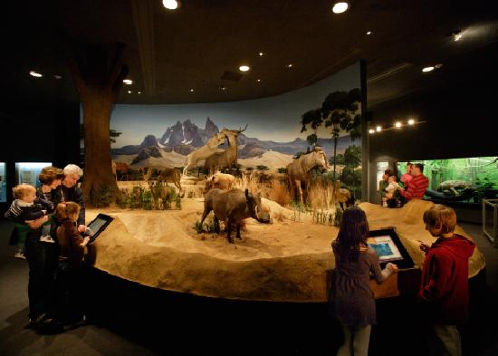 Wilmington, DE: Delaware Museum of Natural History