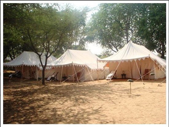 Pushkar Safari Camp