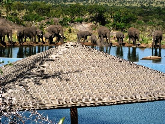 Bilila Lodge: pool view of elephants