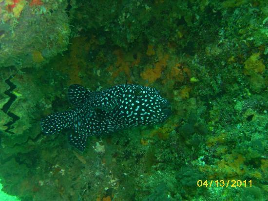 Cabo Pulmo Beach Resort: Diving