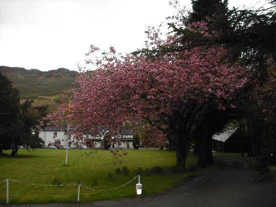 The Brander Lodge Hotel &amp; Bistro: Brander Lodge &amp; the blossom tree