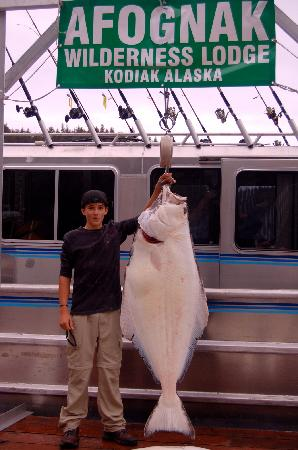 Afognak Wilderness Lodge: Where else can you catch halibut this size?