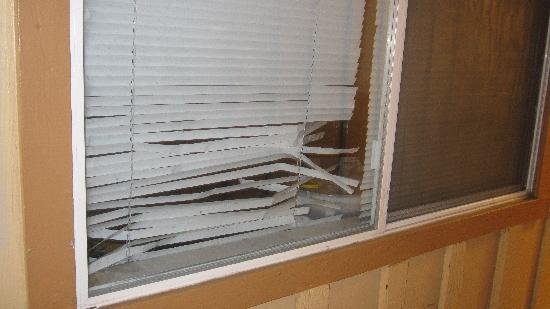 Comfort Inn Near Warner Center: Ratty blinds