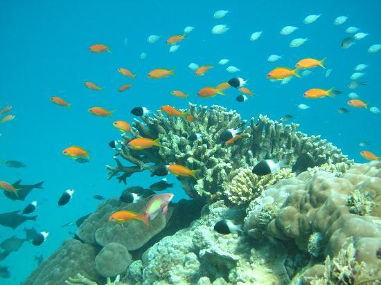 Chumbe Island Coral Park: Beautiful coral reefs and fishes