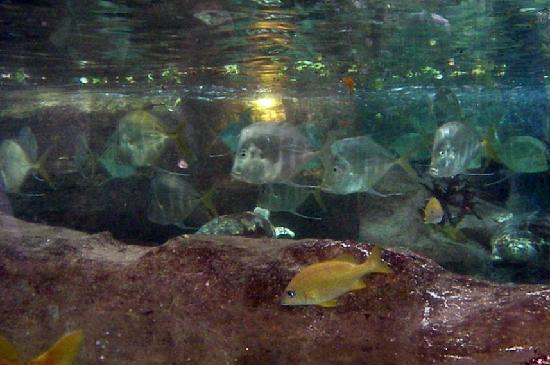 Fish Swimming Upstream Picture Of Dallas World Aquarium