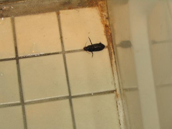 Travelodge Amarillo West: Travelodge bathroom bugs