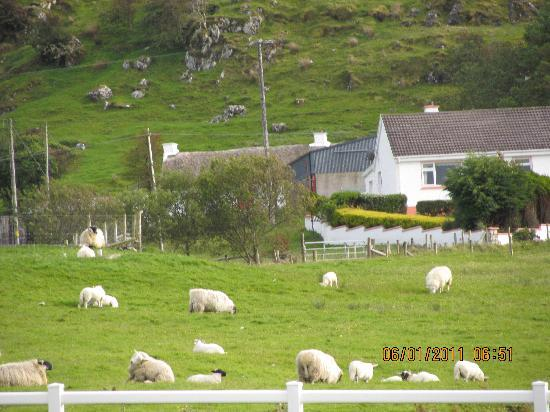 Gort Na Mona B & B: Our view from a grand breakfast table