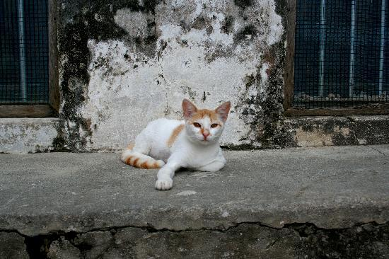 Stone Town, Tanzania: Local 'wildlife'