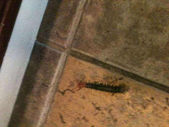"Hampton Inn Marble Falls-On The Lake: Front half of Centiped on a 12"" tile"