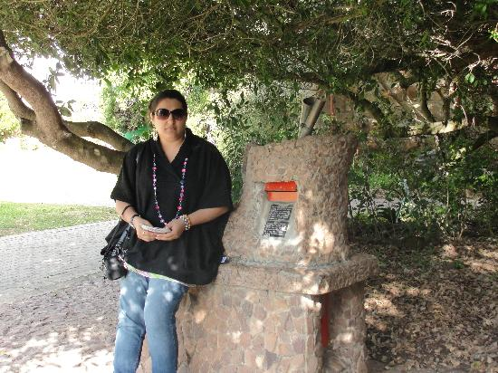 Garden Route, South Africa: Post Box Tree