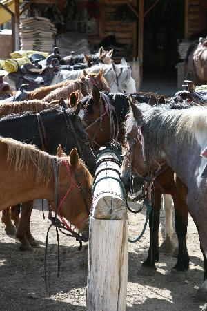 Paradise Guest Ranch: Horses saddled and ready for the day!