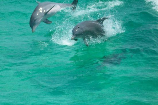 Pensacola Beach, FL: Dolphins