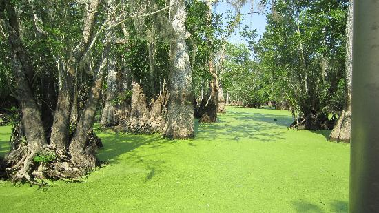 Slidell, Louisiane : Cyprus Swamp