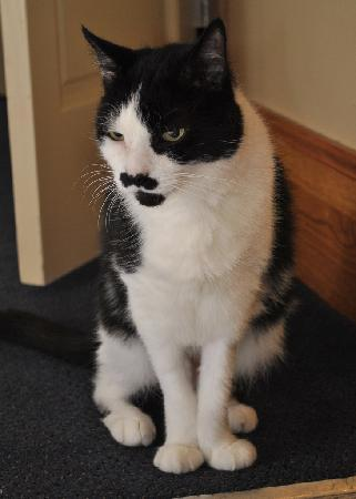 Chelsea Pines Inn: Charlie - The Greeter Cat. You may know his uncle, Mr. Chaplin.