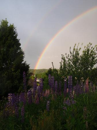 Harbor House Inn: Rainbow and Lupines across the street