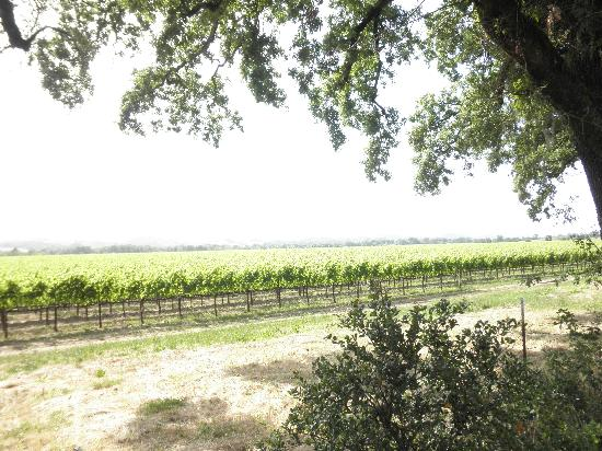 Hampton Inn & Suites Windsor - Sonoma Wine Country: Grapevines in Windsor
