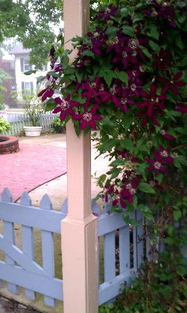Springfield House Bed and Breakfast: Gate to the driveway