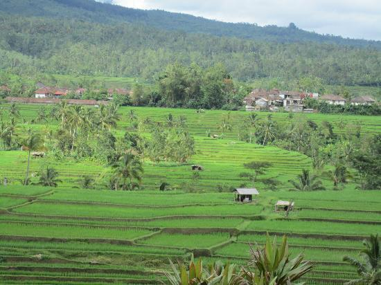 Seminyak, Indonesia: Rice fields going to Budgal