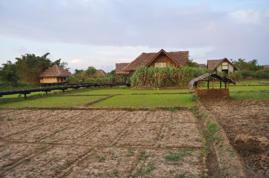 Jetwing Vil Uyana: the place