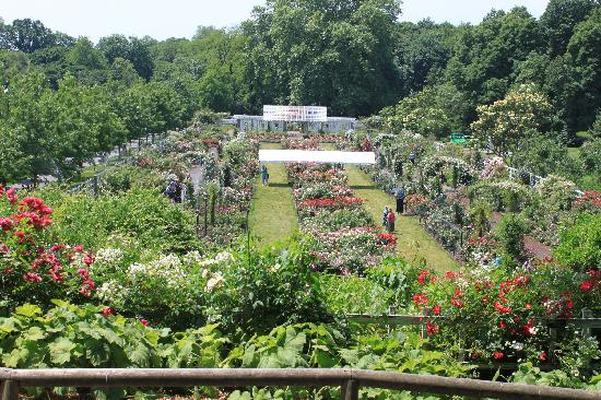 Cranford Rose Garden Picture Of Brooklyn Botanic Garden Brooklyn Tripadvisor