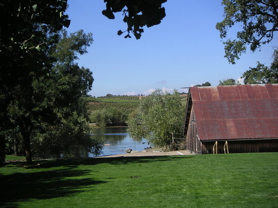 Jackson, Californie : picinicing area of one of the wineries 